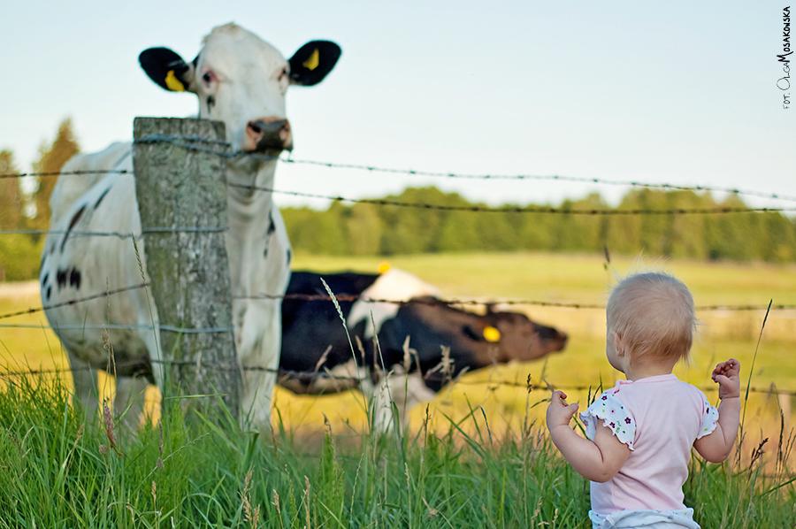 Zdjęcie w wiejskim plenerze, małe dziecko patrzące na krowę.